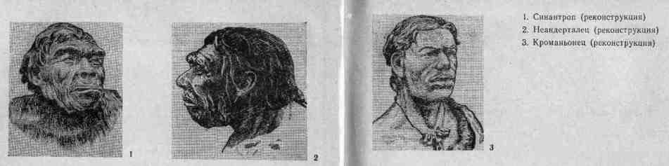 Синантроп, неандерталец, кроманьонец