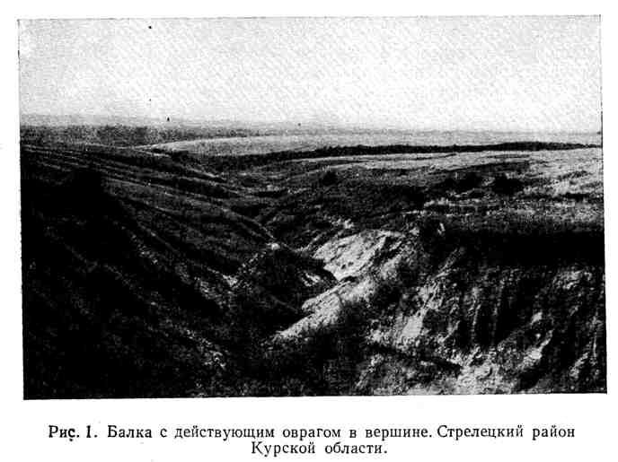 Балка с действующим оврагом в вершине. Стрелецкий район Курской области
