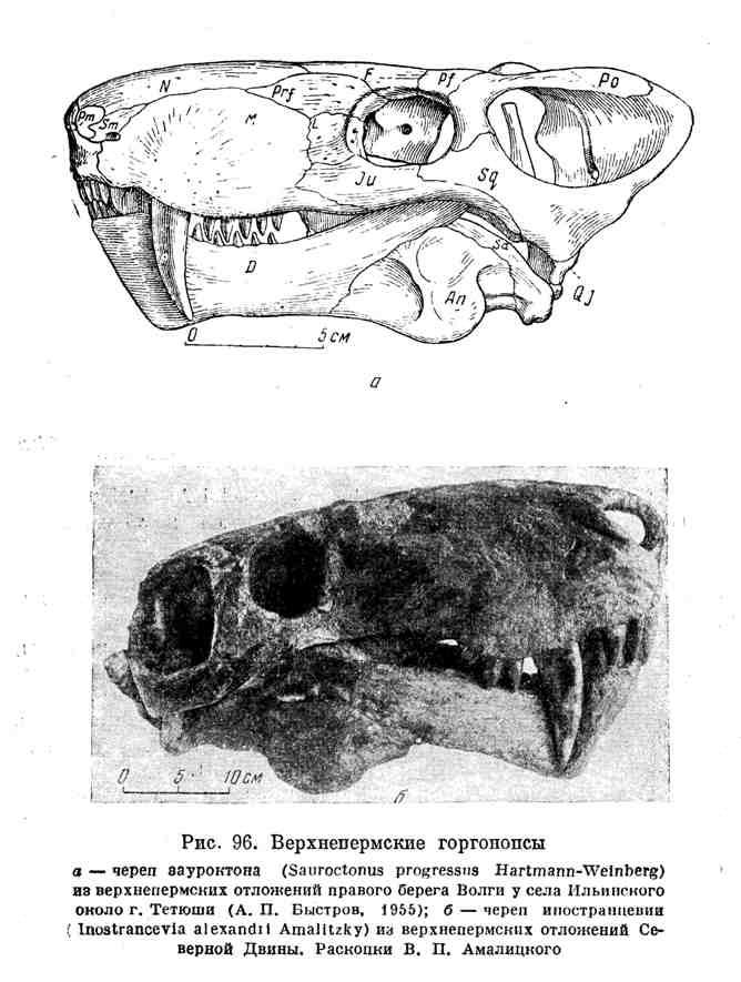 Верхнепермские горгонопсы