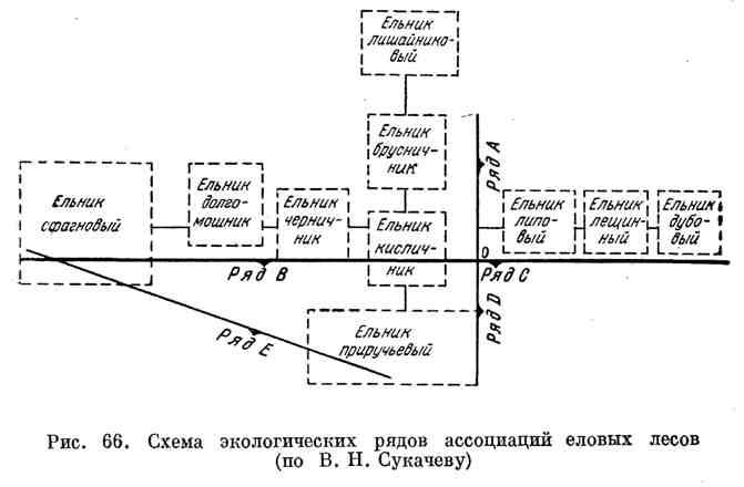 Схема экологических рядов ассоциаций еловых лесов