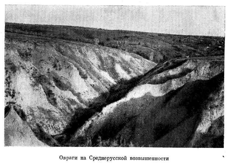 Овраги на Среднерусской возвышенности