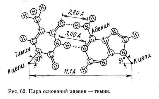 Пара оснований аденин - тимин