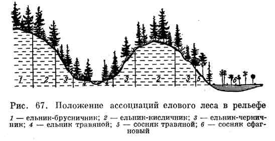 Положение ассоциаций елового леса в рельефе