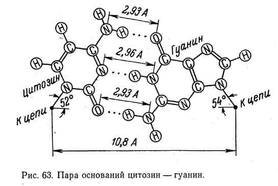 Пара оснований цитозин - гуанин