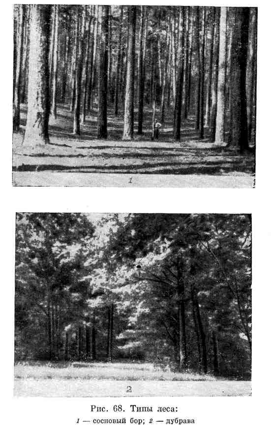 Типы леса