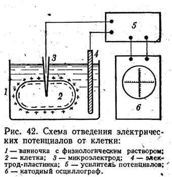 Схема отведения электрических потенциалов от клетки