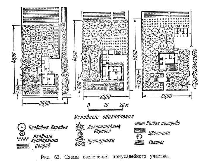 Схема озеленения приусадебного участка
