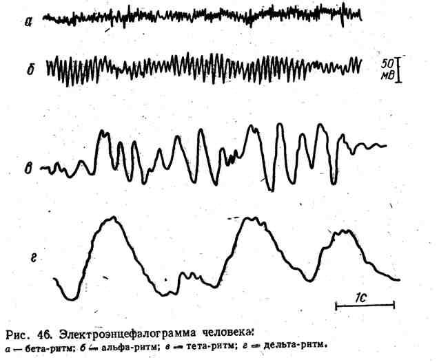 Электроэнцефалограмма человека