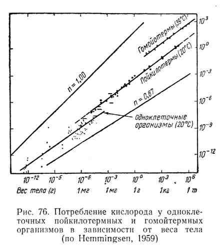 Потребление кислорода у одноклеточных пойкилотермных и гомойтермных организмов в зависимости от веса тела