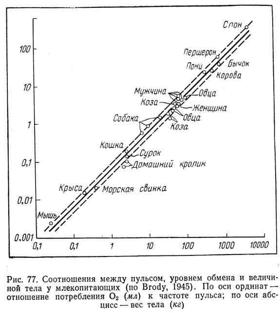 Соотношения между пульсом, уровнем обмена и величиной тела у млекопитающих