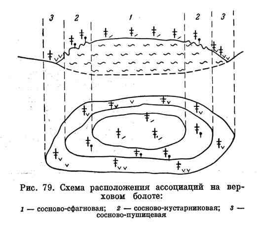 Схема расположения ассоциаций на верховом болоте