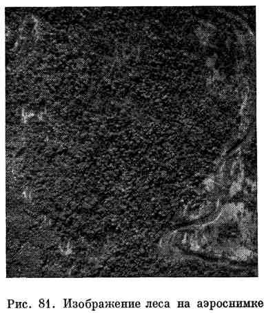 Изображение леса на аэроснимке
