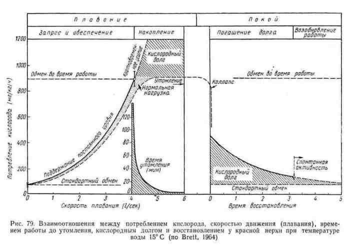 Взаимоотношения между потреблением кислорода, скоростью движения (плавания), временем работы до утомления, кислородным долгом и восстановлением у красной нерки при температуре воды 15 градусов
