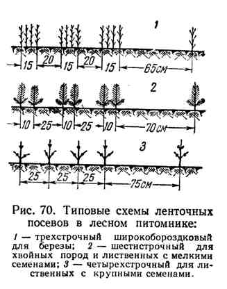 Типовые схемы ленточных посевов в лесном питомнике