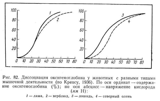 Диссоциация оксигемоглобина у животных с разными типами мышечной деятельности