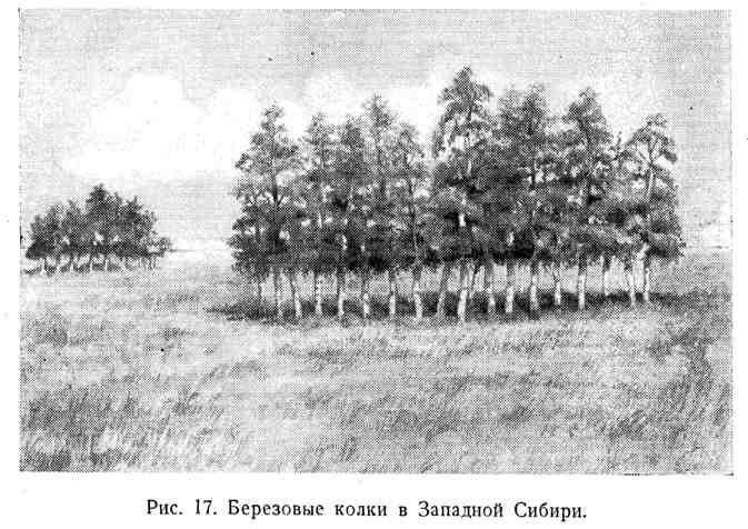 Берёзовые колки в Западной Сибири