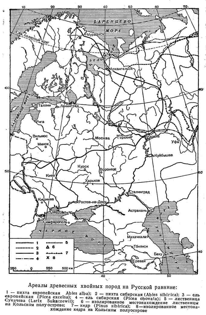 Ареалы древесных хвойных пород на Русской равнине