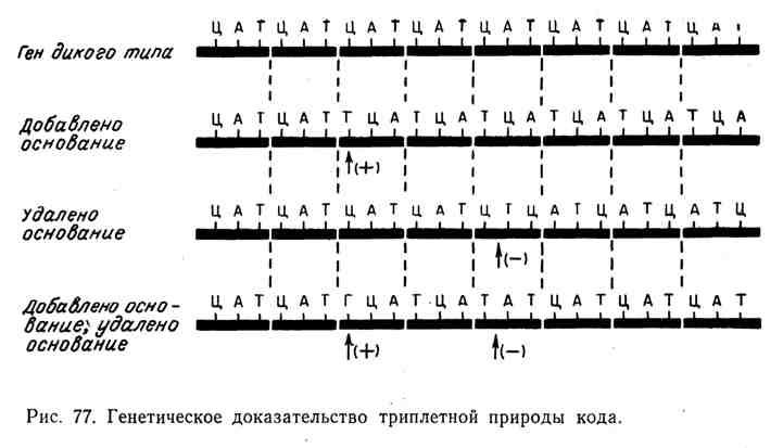 Генетическое доказательство триплетной природы кода