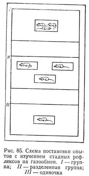 Схема постановки опытов с изучением стадных рефлексов на газообмен