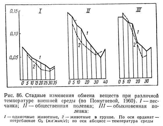 Стадные изменения обмена веществ при различной температуре внешней среды