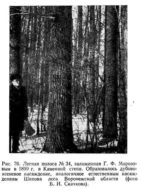 Лесная полоса №34, заложенная Г. Ф. Морозовым в Каменной степи