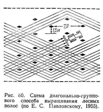 Схема диагонально-группового способа выращивания лесных полос