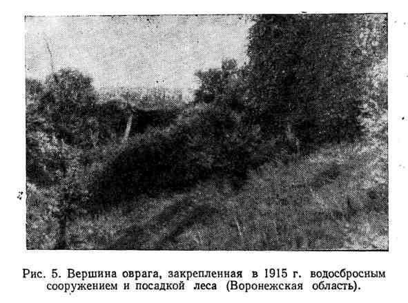 Вершина оврага, закреплённая в 1915 г. водосбросным сооружением и посадкой леса