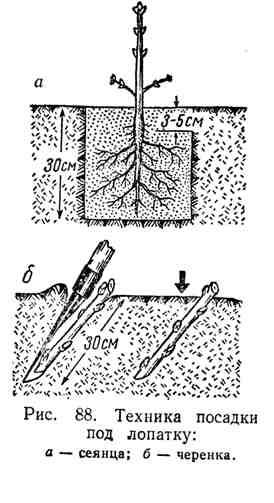 Техника посадки под лопатку