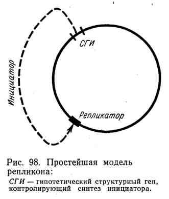 Простейшая модель репликона