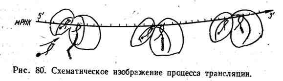 Схематическое изображение процесса трансляции