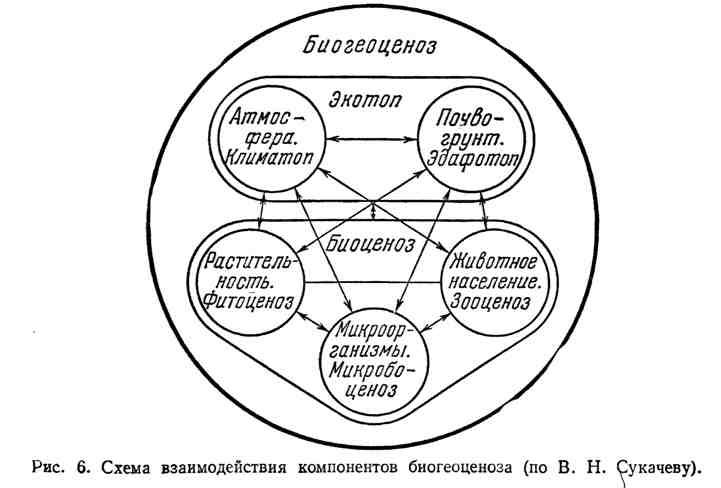 Схема взаимодействия компонентов биогеоценоза (по В. Н. Сукачеву)