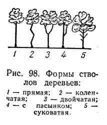 Формы стволов деревьев
