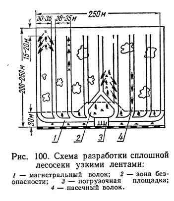 Схема разработки сплошной лесосеки узкими лентами