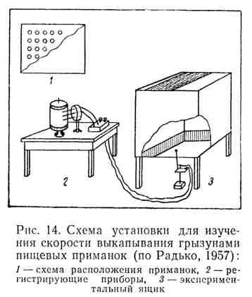 Схема установки для изучения скорости выкапывания грызунами пищевых приманок