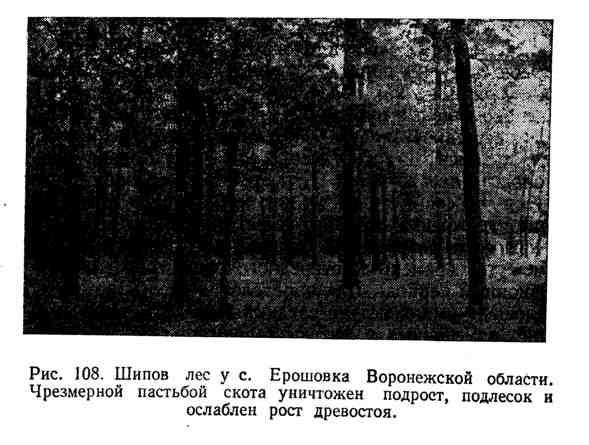 Шипов лес у с. Ерошовка Воронежской области