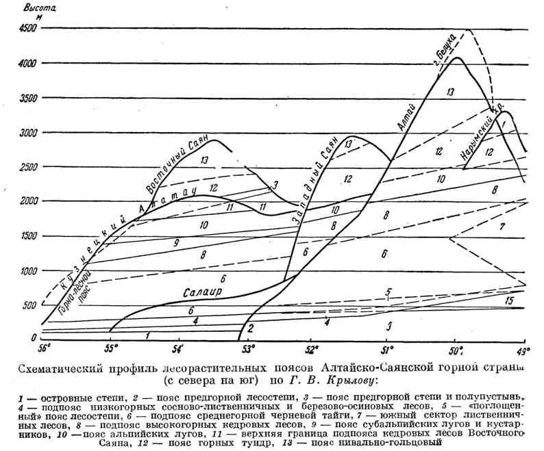 Схематический профиль лесорастительных поясов Алтайско-Саянской горной страны