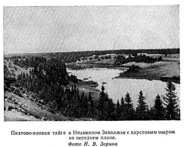Пихтово-еловая тайга в Низменном Заволжье с карстовым озером на переднем плане