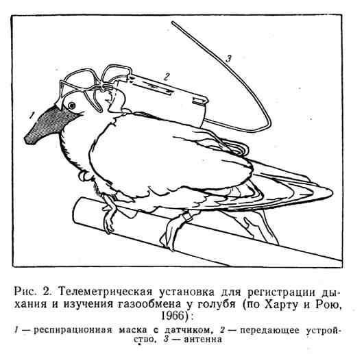 Телеметрическая установка для регистрации дыхания и изучения газообмена у голубя