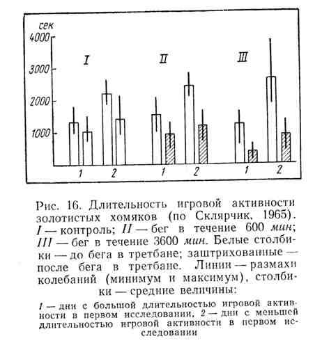 Длительность игровой активности золотистых хомяков