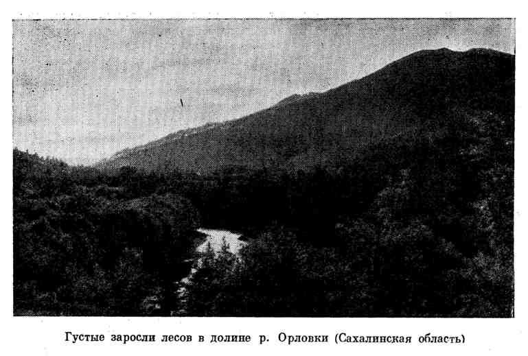 Густые заросли лесов в долине р. Орловки