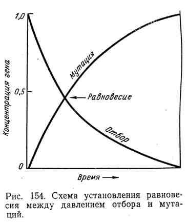 Схема установления равновесия между давлением отбора и мутаций