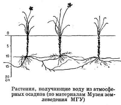 Растения, получающие воду из атмосферных осадков