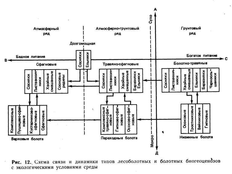 Схема связи и динамики типов лесоболотных и болотных биогеоценозов с экологическими условиями среды