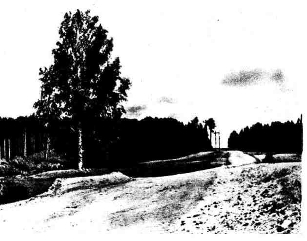 Сохранение одиночного дерева при строительстве автомобильной дороги