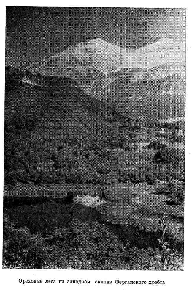 Ореховые леса на западном склоне Ферганского хребта