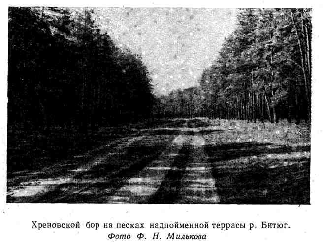 Хреновской бор на песках надпойменной террасы р. Битюг.