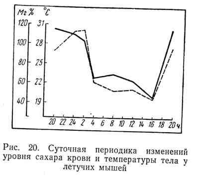 Суточная периодика изменений уровня сахара крови и температуры тела у летучих мышей