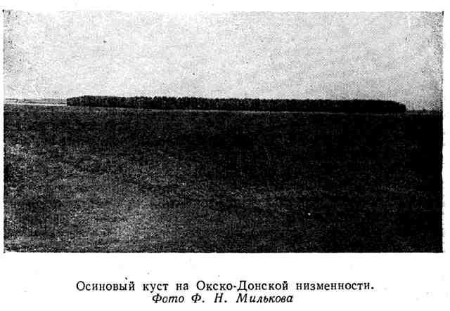 Осиновый куст на Окско-Донской низменности