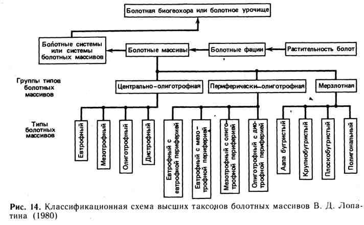 Классификационная схема высших таксонов болотных массивов В. Д. Лопатина