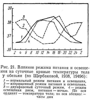 Влияние режима питания и освещения на суточные кривые температуры тела у обезьян